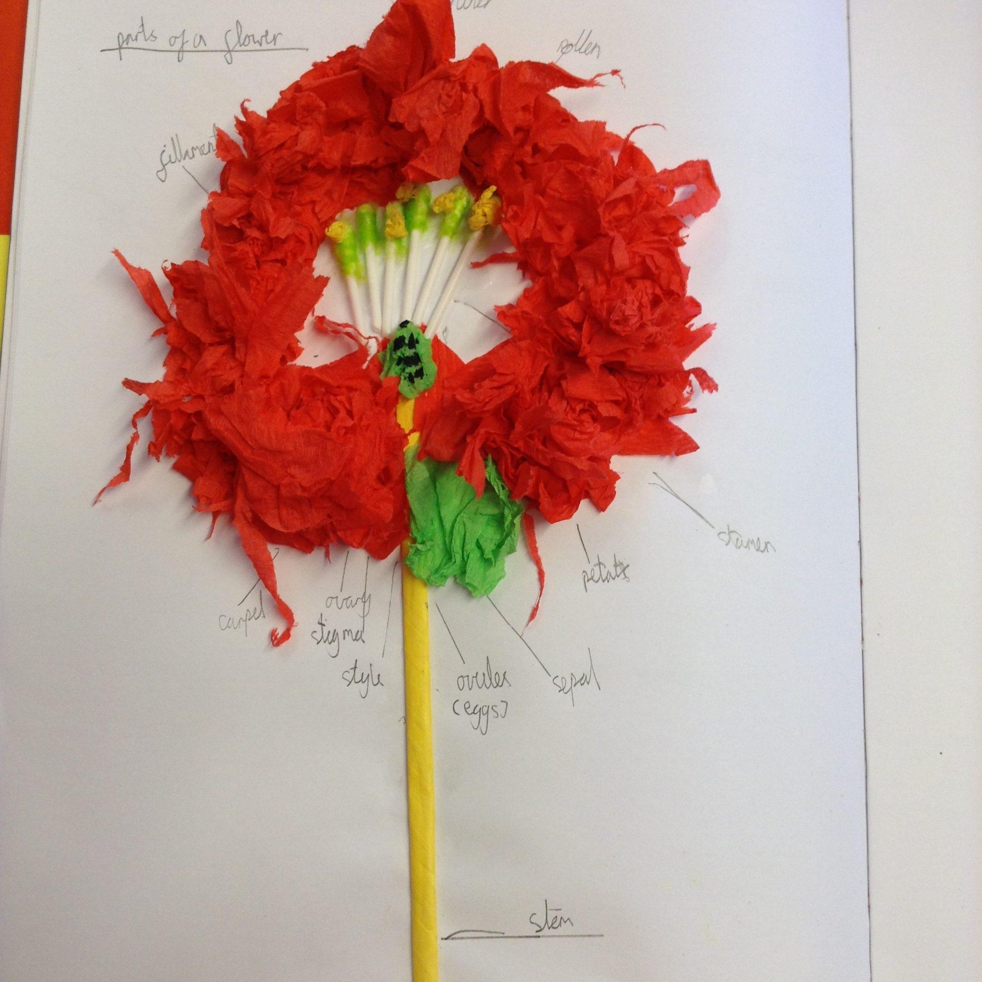 Ash class beautiful flower diagram collages ccuart Images