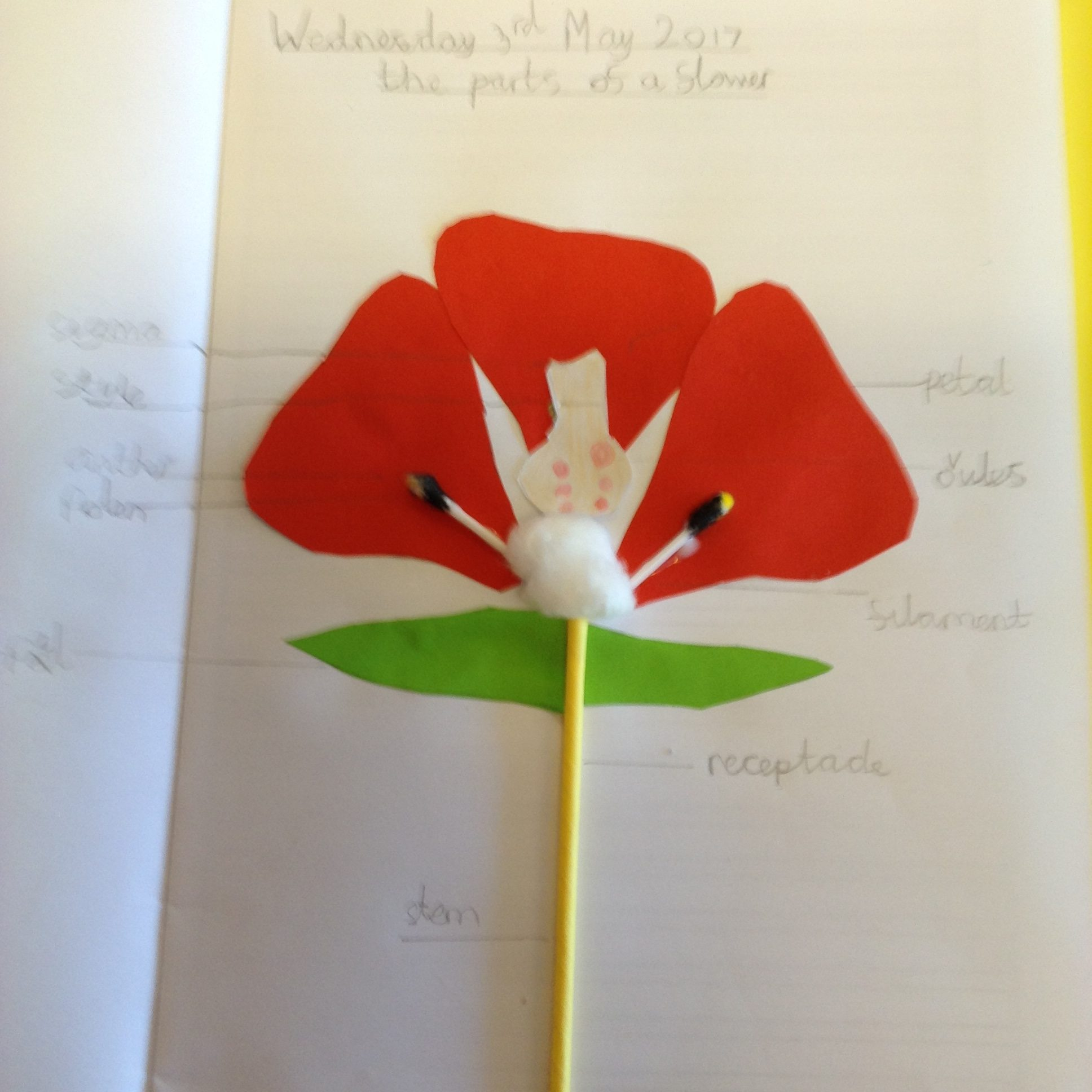 Ash class beautiful flower diagram collages pooptronica Images